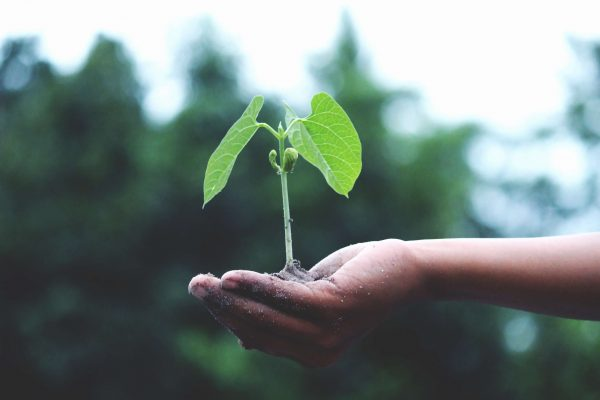 growth and profitability